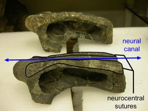 cm-555-c4-sutures-500.jpg