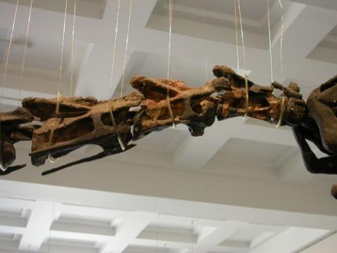 cetiosaurus-lateral-500.jpg