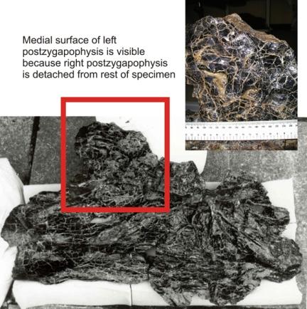 miwg7306-prezyg-fossa-composite-resized.jpg