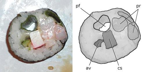 av, avocado; cs, crab-stick; pf, pneumatic foramen; pr, prawn.