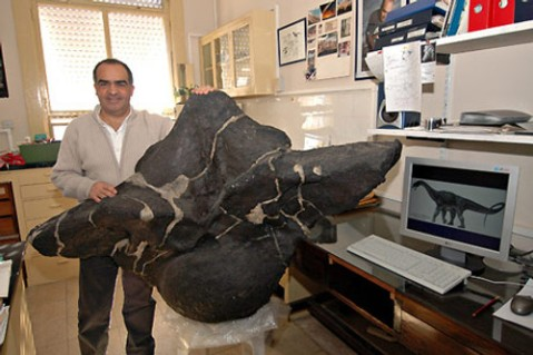 Puertasaurus reuili, second dorsal vertebra, anterior view.