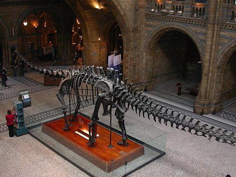 nhm-diplodocus-480