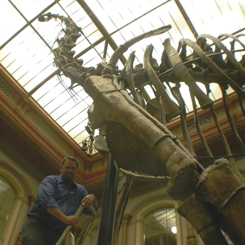 matt-with-brachiosaurus-480