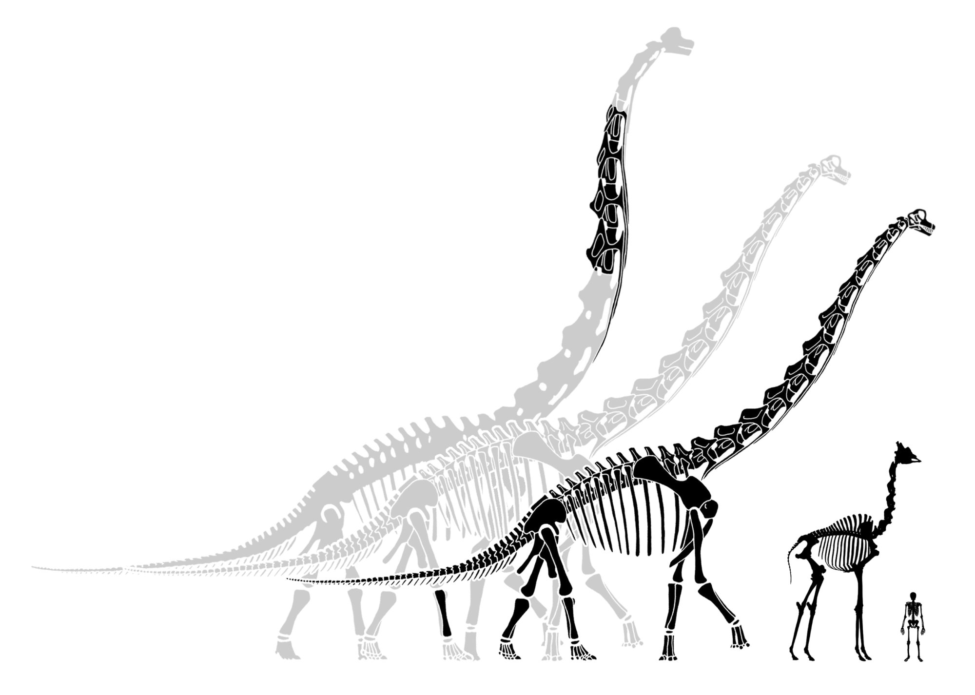 Brachiosaurus: both bigger and smaller than you think ...