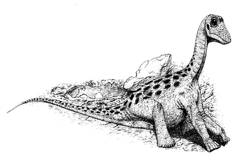 paul1994-fig15-3-sauropod-hatchling-480