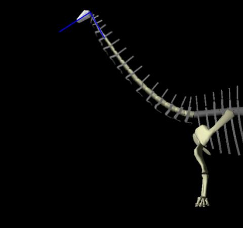 Apatosaurus 07 HSCCs angled up plus neck