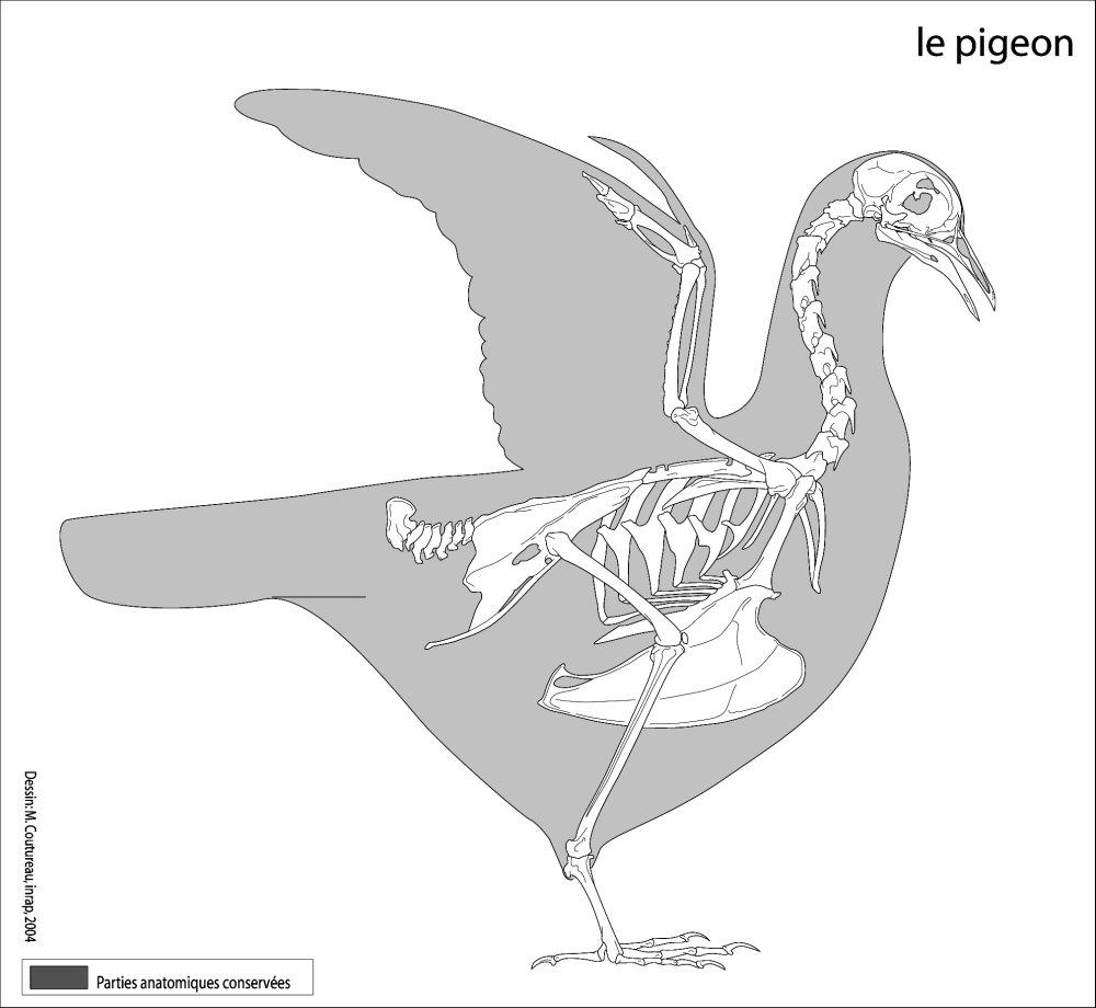 Necks lie | Sauropod Vertebra Picture of the Week