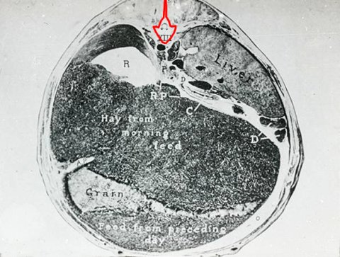Vertebra oulined in red. Click for unmarked original.