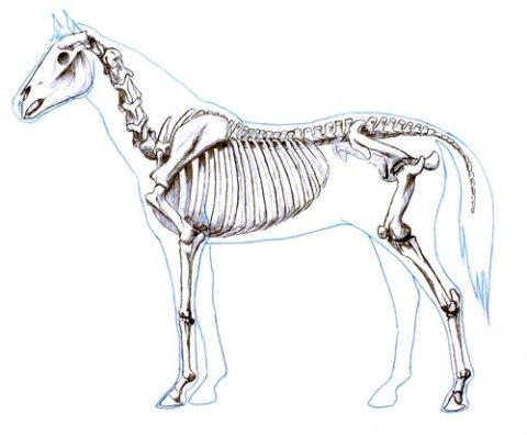 necks lie sauropod vertebra picture of the week. Black Bedroom Furniture Sets. Home Design Ideas