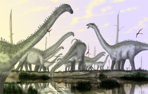 Diplodocus herd -- mostly with necks in habitual raised posture, with one individual drinking.  By Mark Witton.