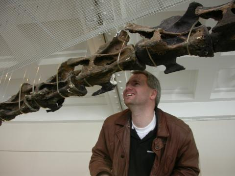 Median part of the subhorizontally mounted neck of the Rutland Cetiosaurus skeleton at the Leicester City Museum, left lateral view.  Mike Taylor for scale.