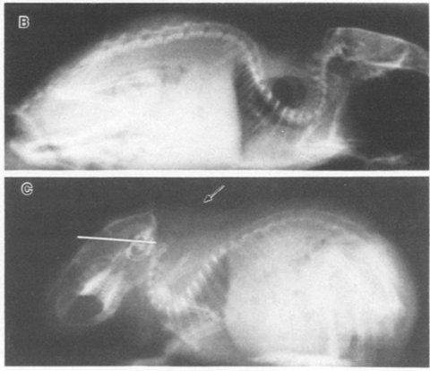 Vidal-et-al-1986-fig5bc