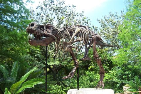 "Tyrannosaurus rex ""Sue"" cast, at Animal Kingdom, Walt Disney World, Florida.  From wwarby's Flickr photostream."