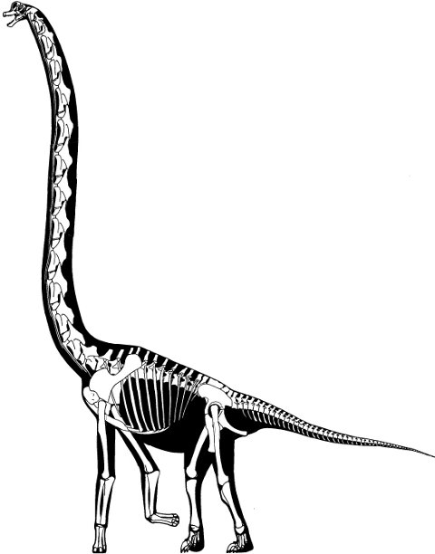 A different view of Sauroposeidon, based on elongation of the cervicals and legs of Brachiosaurus brancai and the insertion of two additional cervicals. Heavily and carelessly modified from Paul (1988: fig. 1)