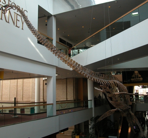 Denver_elasmosaur_June-2009