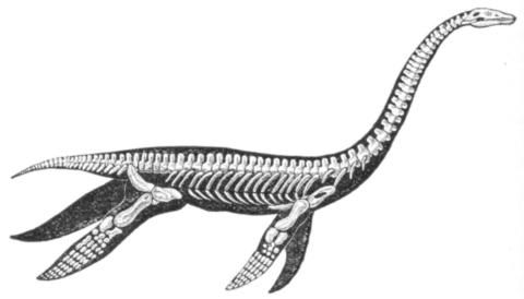 large_Nicholson_plesiosaur_June-2009