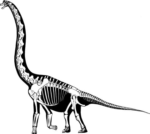 Brachiosaurus brancai skeletal reconstruction in left lateral view. From Paul (1988:fig. 1)