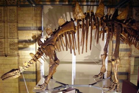 Tuojiangosaurus_skeleton_NHM