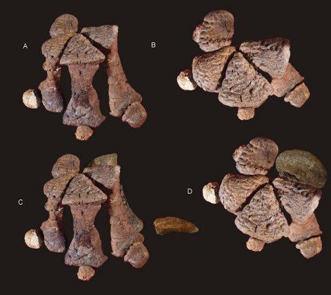 Diamantinasaurus manus 480