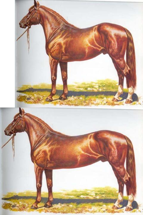 Horse (top); and evil mutant horse with 23% longer torso (bottom).