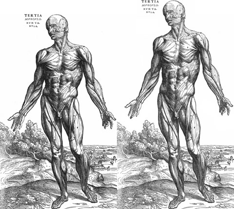 Wilson2006-fig1-human-body-torso-and-+23pc-480px