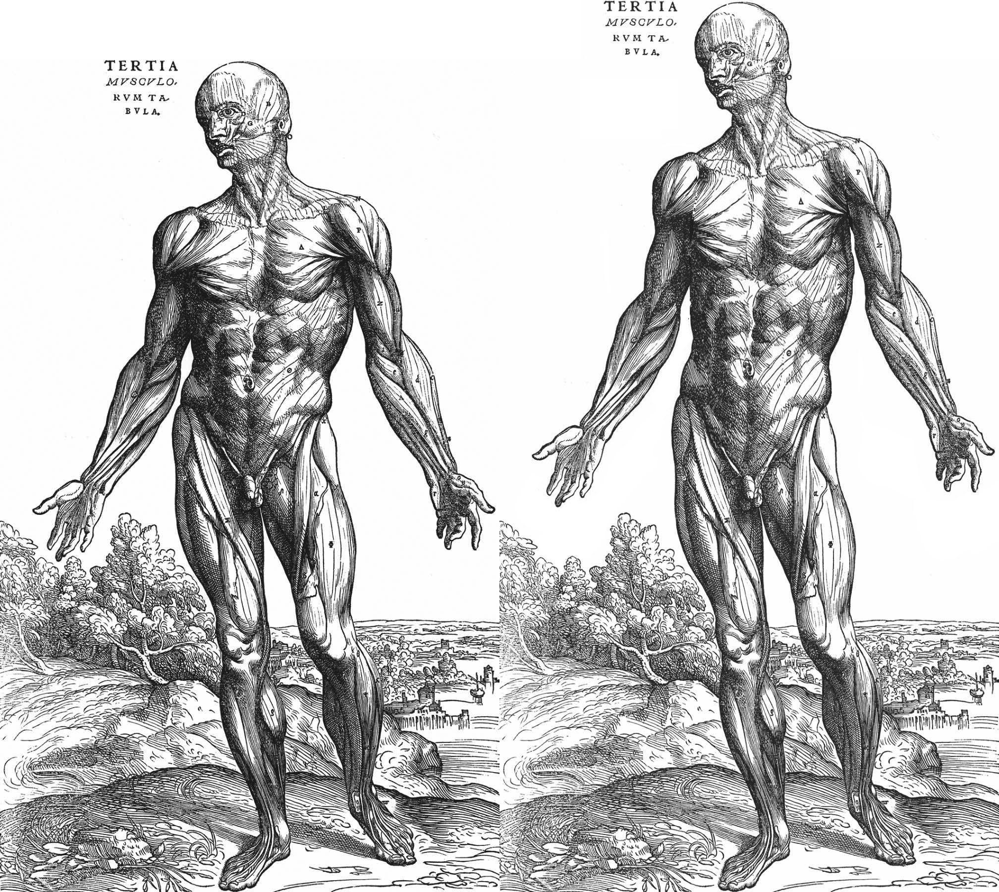 Human body drawing anatomy - crazywidow.info