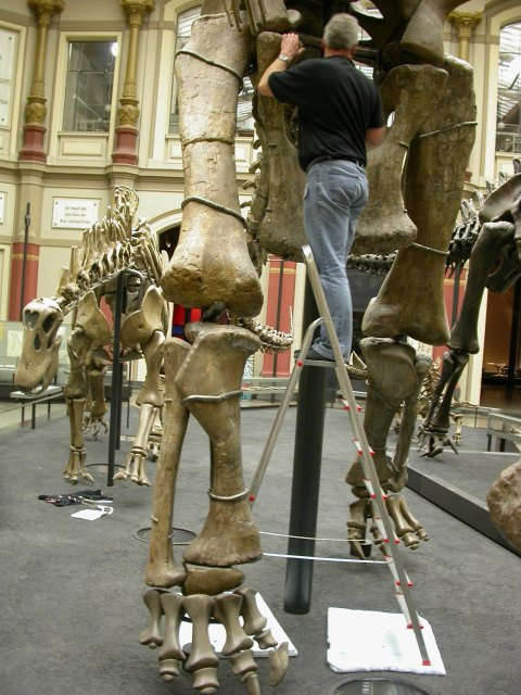 Mike measuring Giraffatitan's naughty bits. Check out the hindfeet. Also note the sauropod vertebrae in the background--titular obligation fulfilled!