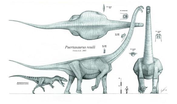 Scaled restoration of the giant titanosaur Puertasaurus by Nima Sassani