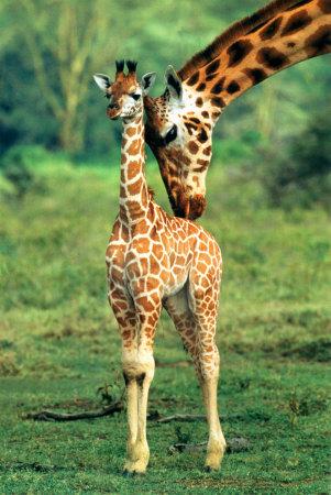 Things To Make And Do Part 8 Baby Giraffe Neck Sauropod Vertebra