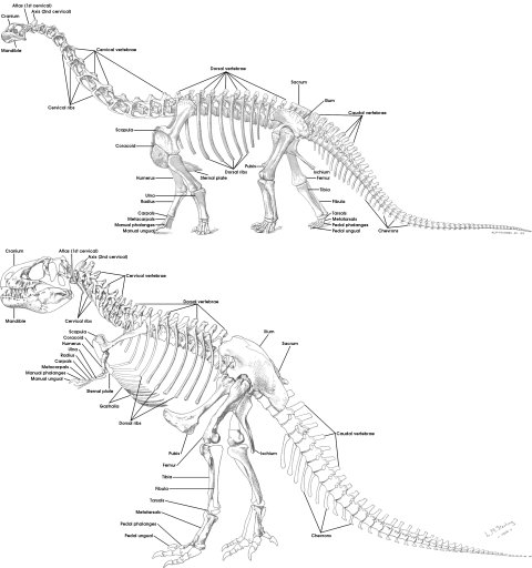 Tutorial 15b: the bones of the theropod skeleton