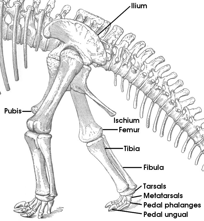 Geol 104 Our Bodies Our Selves Introduction To Vertebrate Osteology