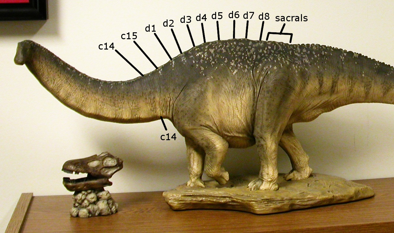 Related Keywords & Suggestions for sideshow apatosaurus