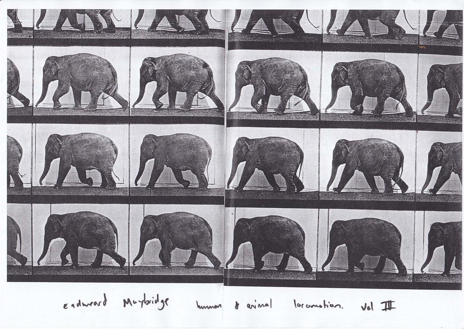elephant | Sauropod Vertebra Picture of the Week