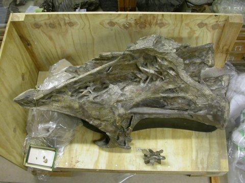 DSCN5593-giraffatitan-vs-plateosaurus