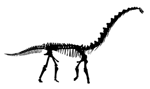 Rapetosaurus skeleton silhouette - high neck