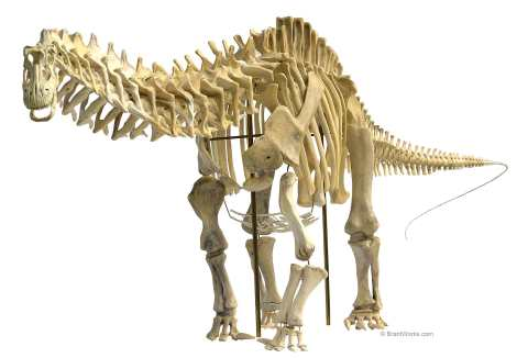Apatosaurus lousiae 1/12 scale skeleton, modelled by Phil Platt, assembled and photographed by Brant Bassam. Image courtesy of BrantWorks.com.