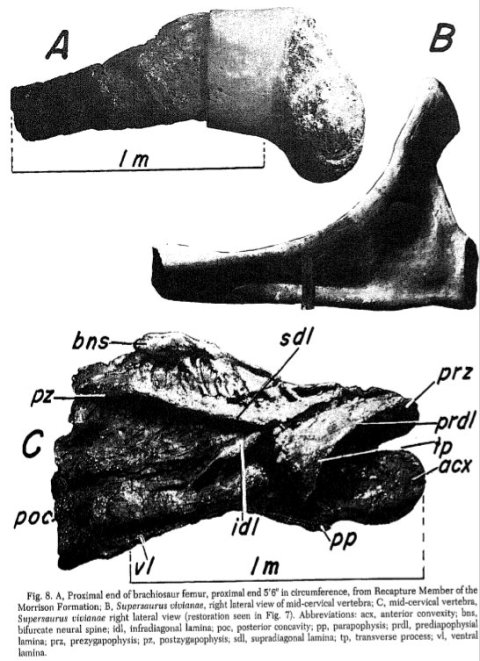 Jensen 1987 figure 8