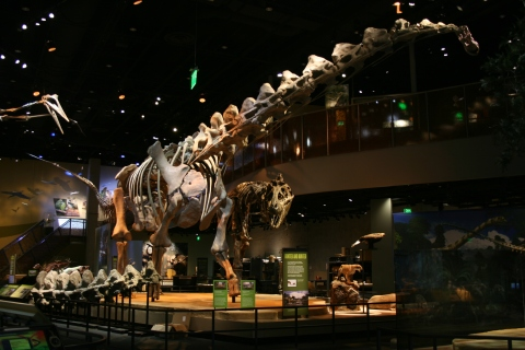 Mounted Alamosaurus in Dallas 1