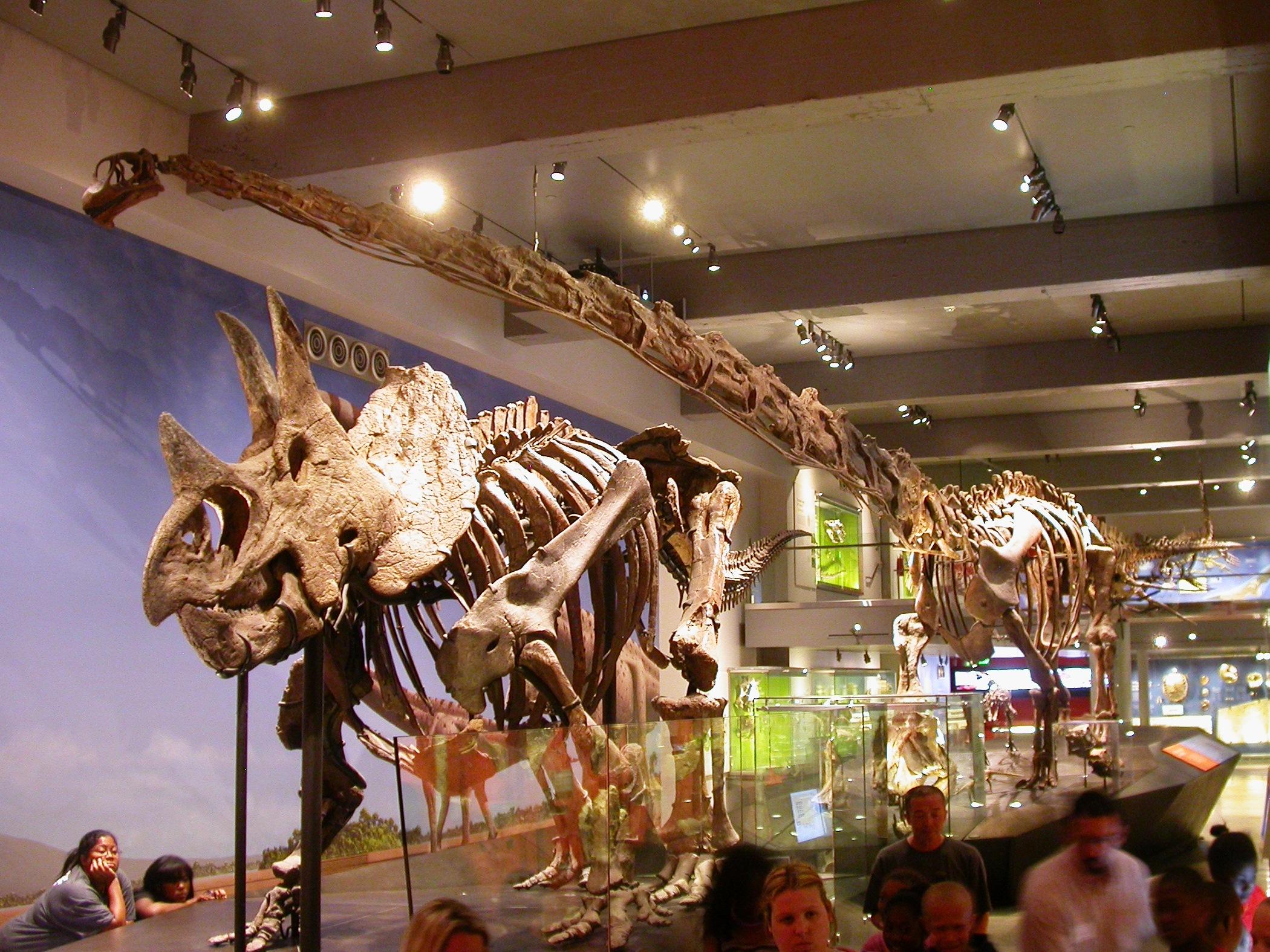 LACM dino camp 3 - Mamenchisaurus and Triceratops 1