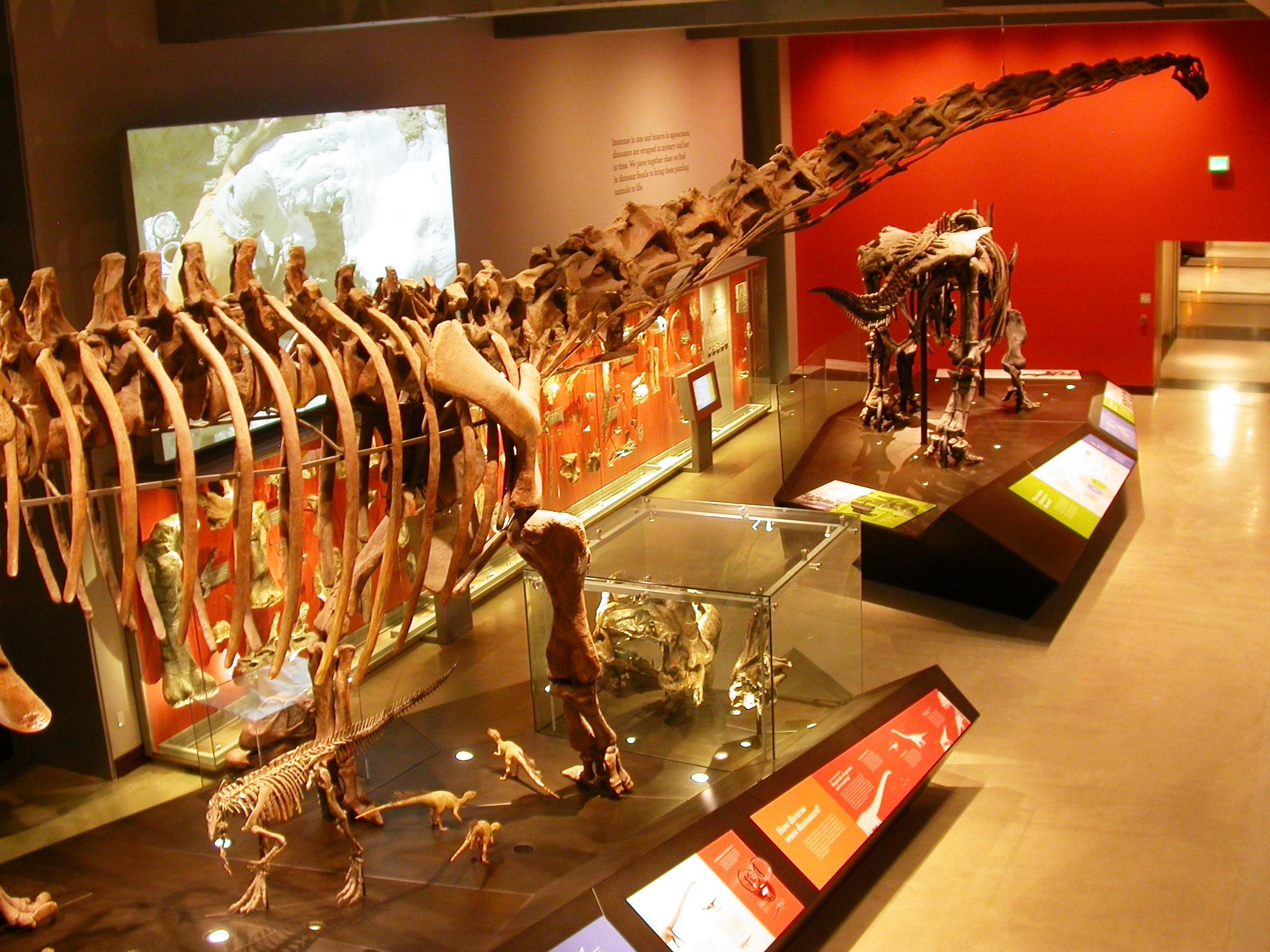 LACM dino camp 4  - Mamenchisaurus and Triceratops 2