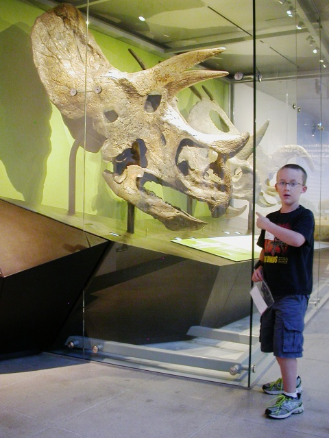 LACM dino camp 6 - ceratopsian skulls