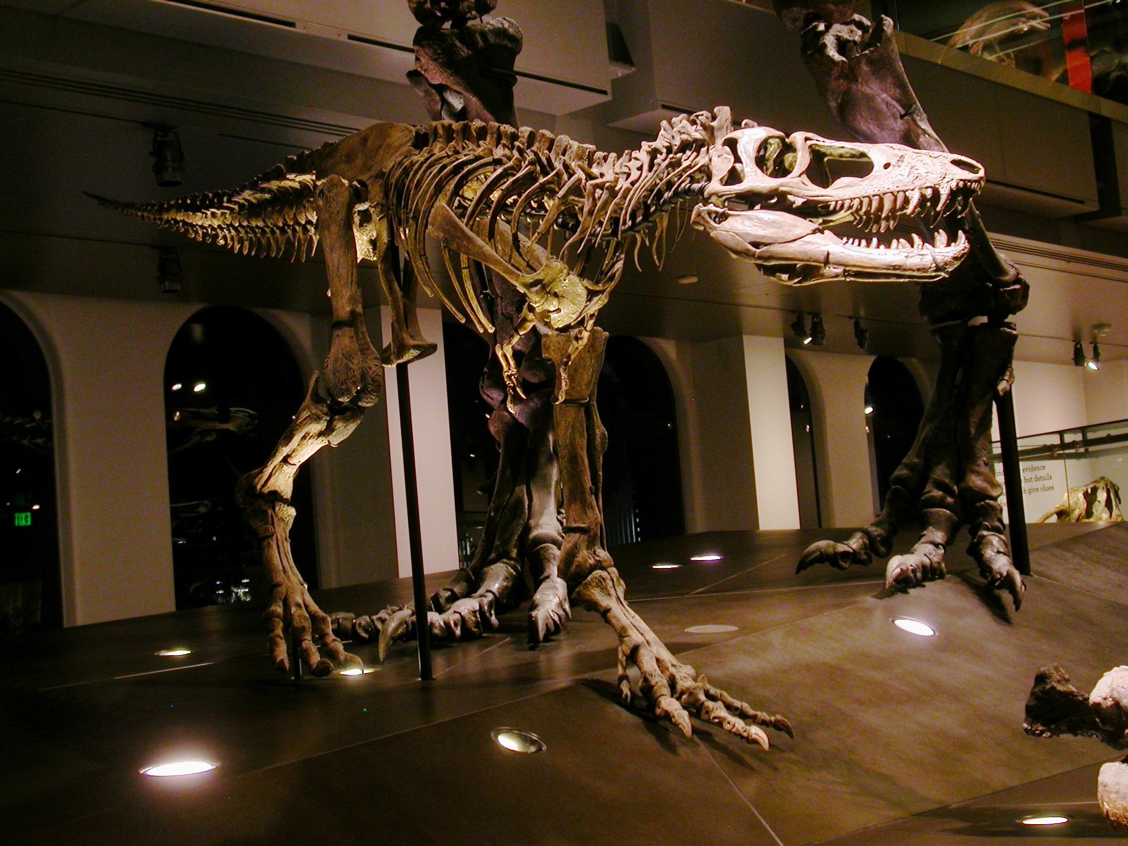 LACM dino camp 8 - baby rex