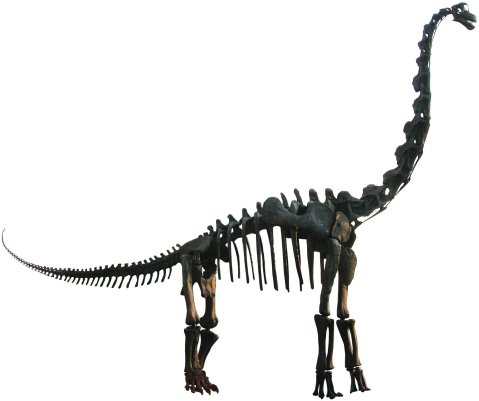 FMNH Brachiosaurus mount lateral