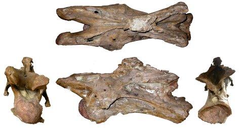 FigureA-Giraffatitan-SI-C5