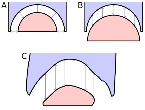 Figure 14. Geometry of opisthocoelous intervertebral joints. Hypothetical models of the geometry of an opisthocoelous intervertebral joint compared with the actual morphology of the C5/C6 joint in Sauroposeidon OMNH 53062. A. Model in which the condyle and cotyle are concentric and the radial thickness of the intervertebral cartilage is constant. B. Model in which the condyle and cotyle have the same geometry, but the condyle is displaced posteriorly so the anteroposterior thickness of the intervertebral cartilage is constant. C. the C5/C6 joint in Sauroposeidon in right lateral view, traced from the x-ray scout image (see Figure 12); dorsal is to the left. Except for one area in the ventral half of the cotyle, the anteroposterior separation between the C5 cotyle and C6 condyle is remarkably uniform. All of the arrows in part C are 52 mm long.