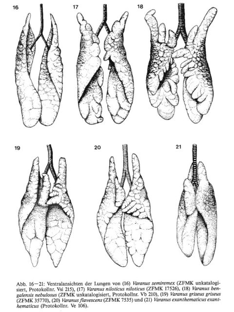 A small sample of monitor lung diversity, from Becker et al. (1989).