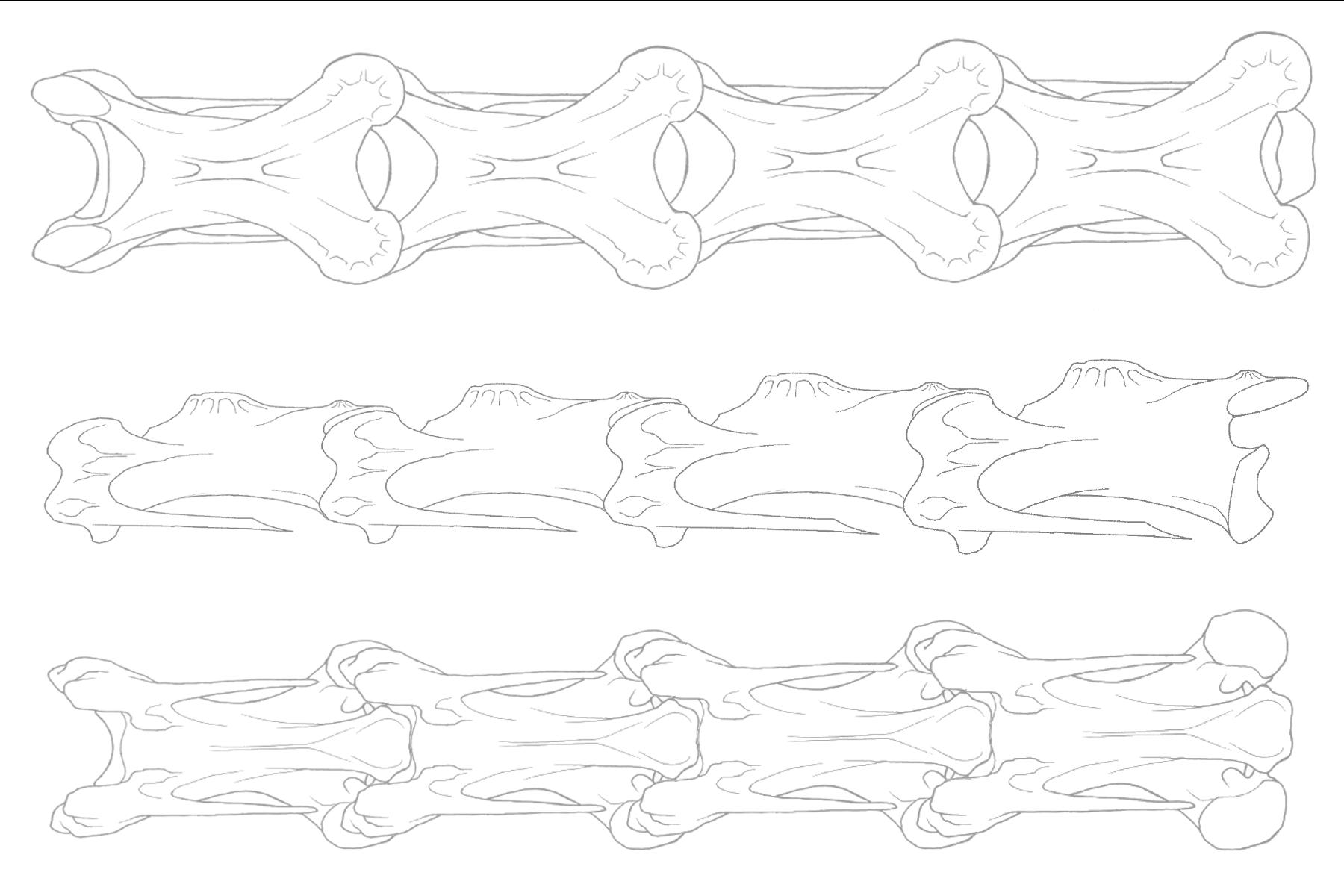 bird neck note sheet - LEFT - all three views