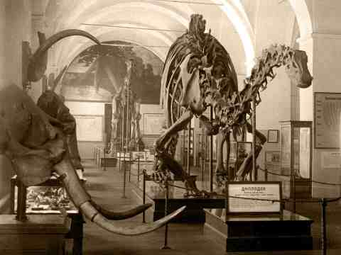 © Paleontological Museum, Moscow In the beginning of XX century, the Severo-Dvinskaya gallery (named after prof. Amalitsky) became the gold basis of the exhibition hall of ancient life in the Geological Museum of St-Petersburg. The museum hall was completed with a cast of the Diplodicus carnegii skeleton presented by E.Carnegy fund in 1913, at the 300-th anniversary of the Romanovs dynasty.