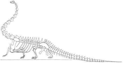 Tornier's sprawling, disarticulated reconstruction of Diplodocus, modified from Tornier (1909, plate II).