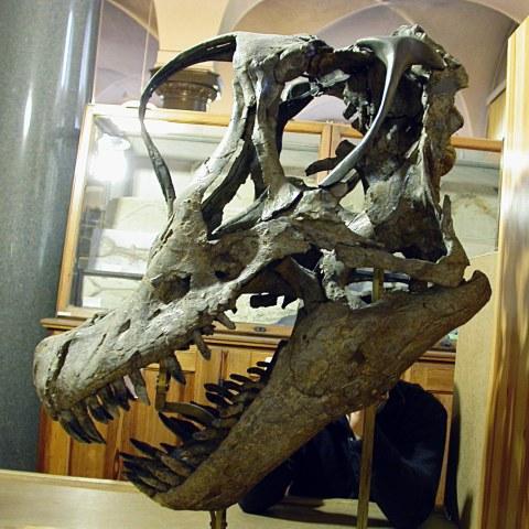 Giraffatitan skull left lateral